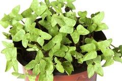 växtkrukabarn Royaltyfri Foto
