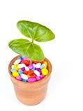 växtkrukar Arkivfoton