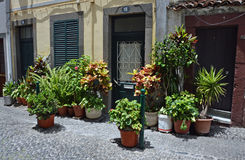 Växtkrukor på gatan Arkivbilder