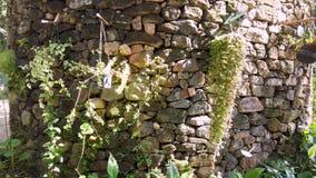 Växtkrukor på stenar väggen stock video