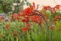 Växtliv 108 Arkivfoto