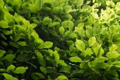 Växtliv 49 Royaltyfri Bild