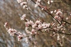 Växtliv 103 Fotografering för Bildbyråer