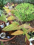 Växtliv i den Florida barnkammaren Arkivbilder