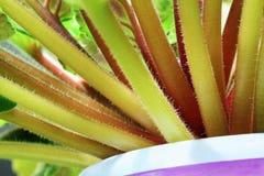 Växtmodell Arkivfoto