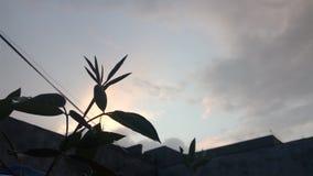 Växtmoln Royaltyfri Fotografi