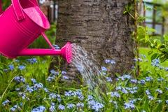 Växtomsorg som bevattnar vårblommaträdgården Arkivfoton