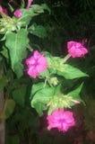 Växtpinkers fotografering för bildbyråer