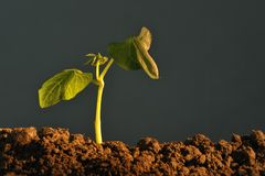 växtplanta royaltyfri bild