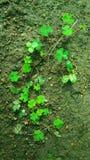 Växtplantor arkivfoton