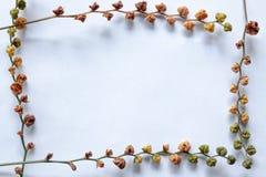 Växtram Arkivfoton