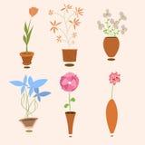 växtset Fotografering för Bildbyråer