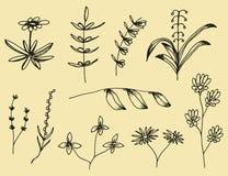 Växtsidauppsättning av botaniska hand-drog vektorteckningar Vintag vektor illustrationer