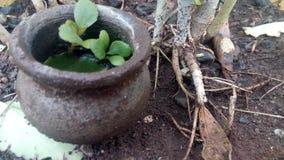 Växtsidor Arkivfoton