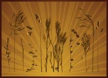 växtsilhouettesvektor Arkivfoto