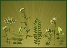 växtsilhouettesvektor Fotografering för Bildbyråer