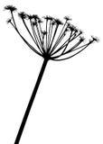 växtsilhouettesvektor Royaltyfri Foto