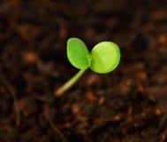 Växtstart som växer. Royaltyfri Bild