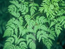 växttextur Arkivbild