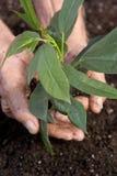 växttid till Royaltyfria Foton