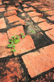 Växttillväxt över röd tegelsten Royaltyfri Foto