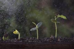 Växttillväxt från kärnar ur trädet Royaltyfri Foto