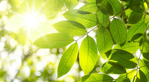 Växttjänstledigheter och naturlig grön miljö Royaltyfri Bild