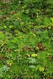 växtvägg Fotografering för Bildbyråer