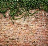 Växtvägg Arkivfoto