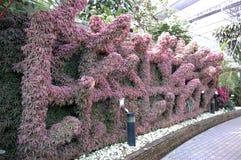 Växtvägg Arkivfoton