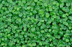 växtvatten Royaltyfria Foton