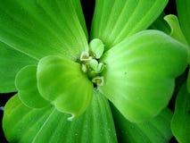 växtvatten Arkivfoto