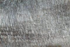 Våg Arkivbild