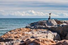 Vågbrytare och hav Arkivfoto