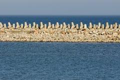 Vågbrytarehav på en solig dag Arkivbild
