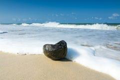 Vågen på stranden med den gamla kokosnöten som punkt av intresse Arkivfoto