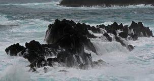 Vågkraschen in i vaggar kustlinjen, Atlantic Ocean, Porto Moniz, madeiraön Portugal, ultrarapid stock video