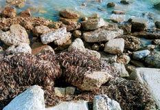 Vågor av havsväxt Royaltyfri Bild