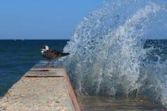 Vågor, en vågbrytare och seagulls Royaltyfri Bild