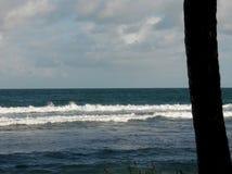 Vågor och en palmträd arkivbilder