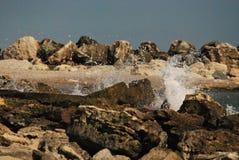 Vågor och vaggar Arkivbilder