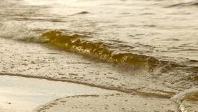 Vågor på en sandig strand stock video