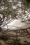 Vågor på högvatten når mangrovarna på Playa Langosta, som den tropiska stormen Nate dunkar Costa Rica i Oktober av 2017 royaltyfria foton