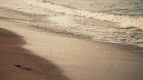 Vågor på stranden i aftonen stock video