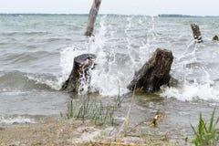 Vågor som bryter på de översvämmade träden arkivbilder