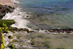 Vågor som kraschar in i, vaggar fodrat med seagrass royaltyfri fotografi