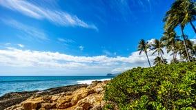 Vågor som kraschar på den steniga shorelinen och palmträden som svänger i vinden under blå himmel Arkivfoto