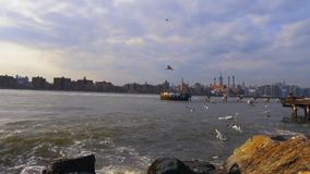 Vågor som plaskar Seagulls Hudson River stock video