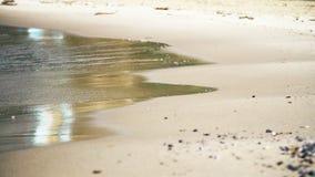 Vågorna som svaller på den sandiga kusten lager videofilmer