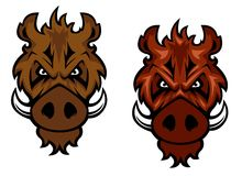 Våldsam vildsvin med krökta beten Arkivbild